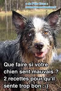 Insecticide Savon Noir Bicarbonate : que faire si votre chien sent mauvais 2 recettes simples ~ Dailycaller-alerts.com Idées de Décoration