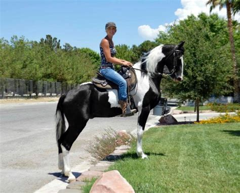 pferde grosspferde tieranzeigen