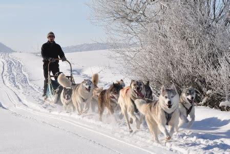 chambres hotes jura chiens de traineaux terre et neige prenovel tourisme