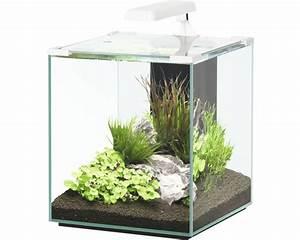 Glasstärke Aquarium Berechnen : aquarium aquatlantis nano cubic 40 mit led beleuchtung ~ Haus.voiturepedia.club Haus und Dekorationen