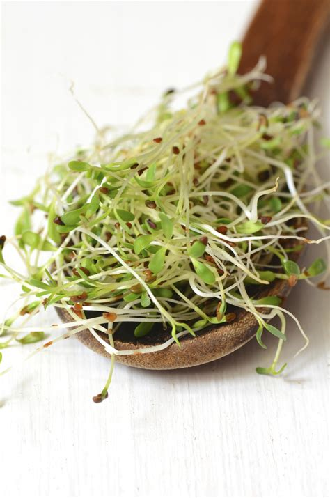 Eat Healthy Find How To Make Sprouts Without Doubts