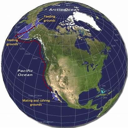 Globe Gifs Animated Buoy Map Data Giphy