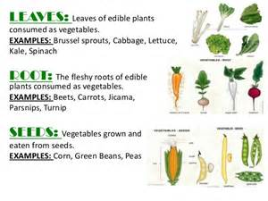 Examples Root Vegetables