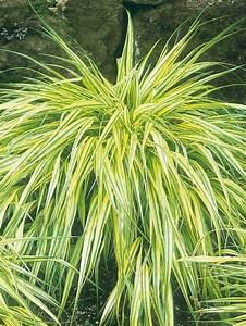 best 25 ornamental grass landscape