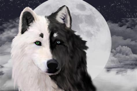 siberian husky th ch silver siberian huskies