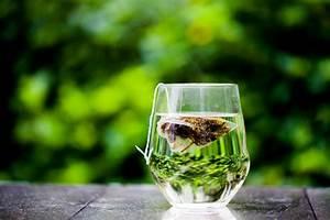 Green Tea Diet Pills Review