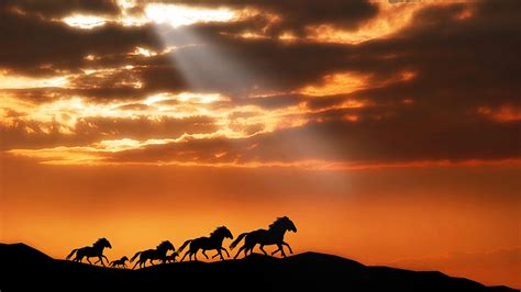 Horses Wallpapers   HD Wallpapers   ID #10332