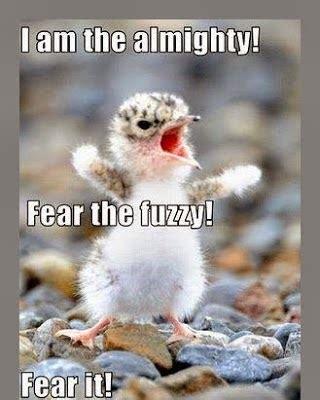 animals quotes funny  quotesgram
