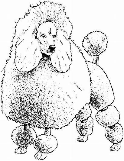 Coloring Pages Poodle Dog Colouring Toy Poodles