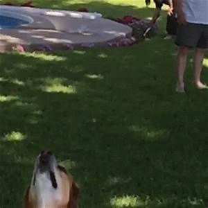 Dog Lol GIF by America's Funniest Home Videos - Find ...