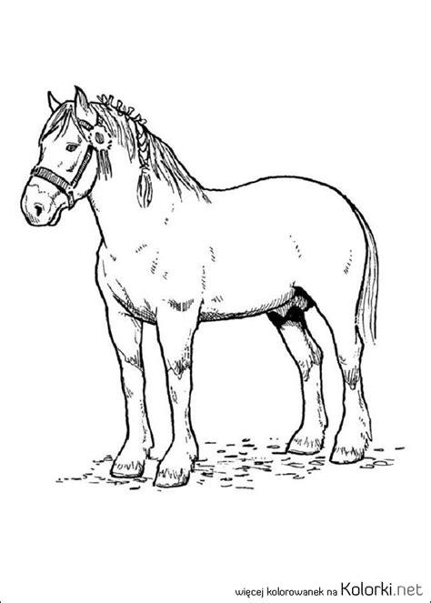 foto de Kolorowanka zwierzęta koń zwierzę