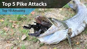 Top 5 Pike attacks - YouTube