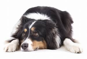 Hunde Größe Berechnen : hund frisst gras warum fressen hunde gras ~ Themetempest.com Abrechnung