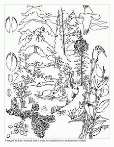 Free Coloring Pages Of Taiga Biome Taiga Animals Coloring ...