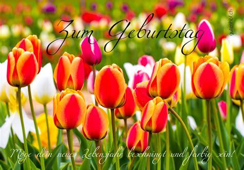 amsterdamse bloemen tulpen tulpen fotokartenwerkstatt