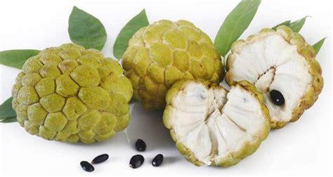 7 health benefits of custard apples or sharifa you didn't