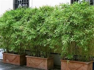 Bambus Als Sichtschutz Im Kübel : bambus auf balkon als sichtschutz gartengestaltung pinterest garten garten pflanzen und ~ Frokenaadalensverden.com Haus und Dekorationen