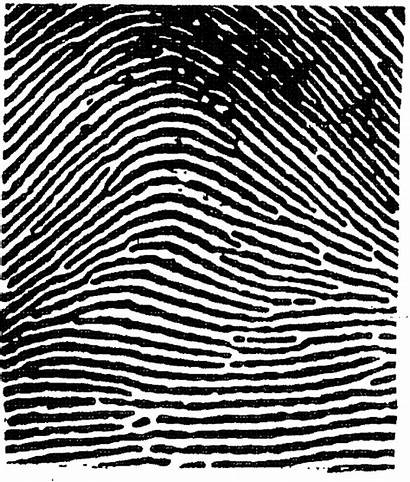 Fingerprint Fingerprints Prints Definition Forensics Analysis Principles