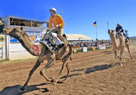 camel facts  camels description  distribution