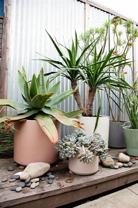 watering succulents in containers different color size and shape planter organized in a group make great potted garden for small