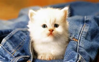 Animals Adorable Pets Babies Fanpop Animal Pet