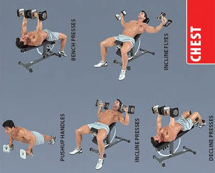 Dumbbellchestexercises  Best Diets And Exercises