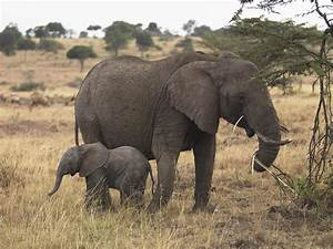 Mother And Baby Elephant Photograph by Keith Levit