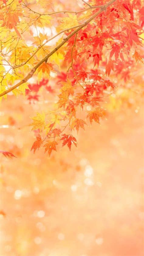 Pretty Fall Wallpaper Iphone 7 by Free Autumn Desktop Wallpaper Backgrounds Wallpaper