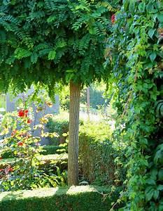 Raumteiler Für Garten : kugelbaum f r kleinen garten ~ Michelbontemps.com Haus und Dekorationen