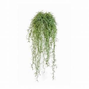 Plante D Extérieur En Pot : plante d exterieur en pot valdiz ~ Dailycaller-alerts.com Idées de Décoration