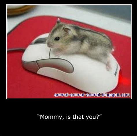 Meme Animal - cool animals memes part 2