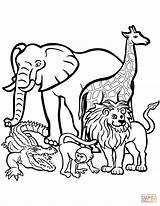 Lion Coloring Pages African Printable Male Clipartmag sketch template