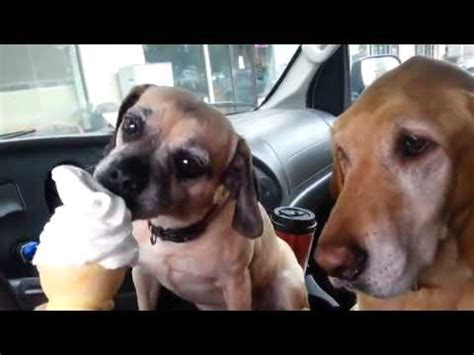 dogs share  ice cream cone video  watched today