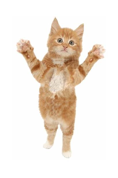 Cat Text Cats Kitten Wig Meow Purrfect