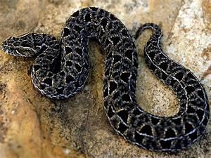 Dangerous Snakes | Wild Animal | Wild Life