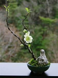 So Knnen Sie Einen Mini Zen Garten Kreieren