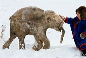 About the Woolly Mammoth | Revive & Restore