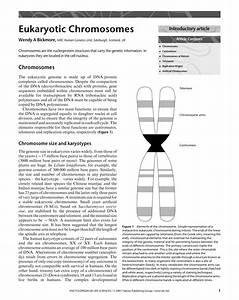 Pdf  Eukaryotic Chromosomes