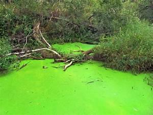 Essig Gegen Algen : algen im teich nachhaltig bek mpfen und entfernen ~ One.caynefoto.club Haus und Dekorationen