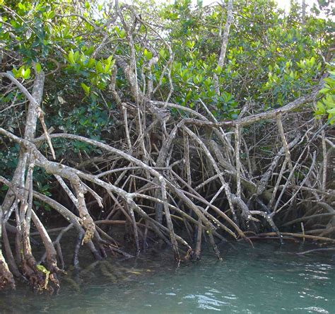 Worlds Largest Mangrove Forest