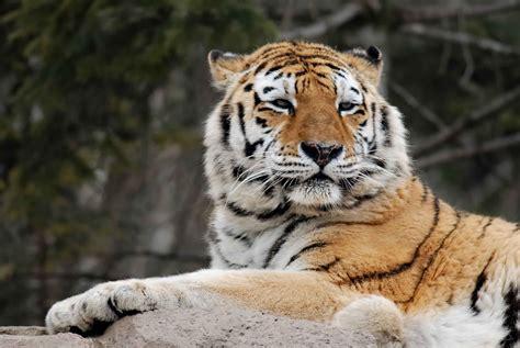 science year  world  animals carnivores animals