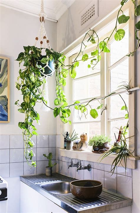 Small Plants For Kitchen Window by A Brisbane Home Filled With Light And Treasured