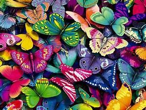 Colorful Butterfly Flying 12 Desktop Wallpaper ...