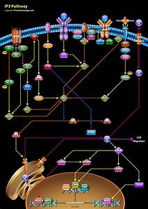 Design Pathways And Biological Graphics