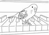 Parakeet Coloring Pages Budgies Bird Parakeets Cockatiel Colouring Birds Easy Cool Birthday Books Clarabelle Animal Happy Paper Reference sketch template