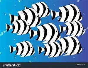 Black And White Striped Damselfish Stock Photo 7464796 ...