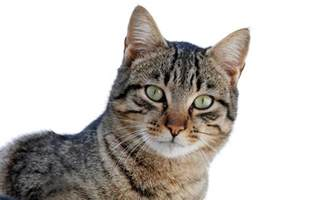 why do cats spray how to get rid of cat urine smell for why do cats