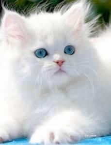 قطط جميلة - YouTube