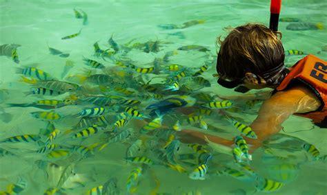 Banana Boat Sunscreen Coral Reef by Banana Koh Hey Resevations 081 4167555