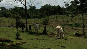Cattle ranching devours Nicaragua's Bosawás Biosphere Reserve